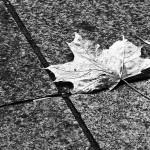 Szary jesienny liść