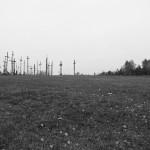 Wzgórze krztży