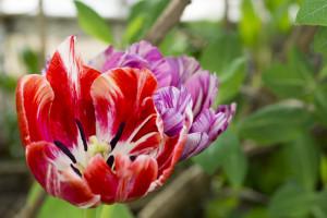 Kwiatki z rabatki (1)