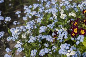 Kwiatki z rabatki (2)