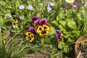 Kwiatki z rabatki (5)