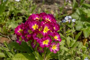 Kwiatki z rabatki (6)
