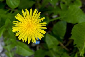 Kwiatki z rabatki (7)