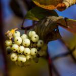 Kolory jesieni-10