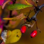 Kolory jesieni-104