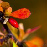 Kolory jesieni-107