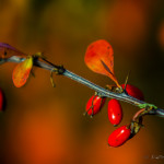 Kolory jesieni-111
