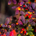 Kolory jesieni-112