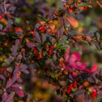 Kolory jesieni-115