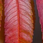 Kolory jesieni-117