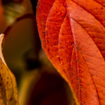Kolory jesieni-13