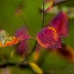 Kolory jesieni-137