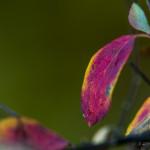 Kolory jesieni-138