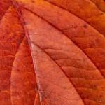 Kolory jesieni-14