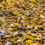 Kolory jesieni-158