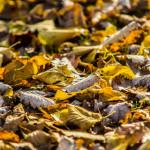 Kolory jesieni-159