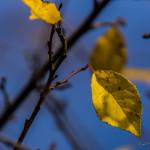 Kolory jesieni-17