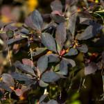 Kolory jesieni-2