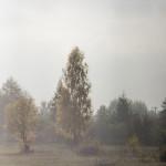 Kolory jesieni-24