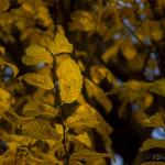 Kolory jesieni-3
