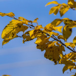 Kolory jesieni-4