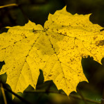 Kolory jesieni-45