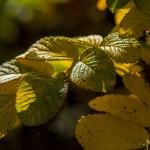 Kolory jesieni-57
