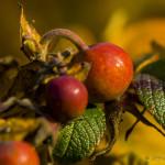 Kolory jesieni-65