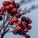Kolory jesieni-69