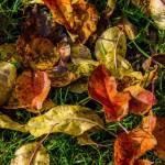 Kolory jesieni-78