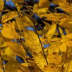 Kolory jesieni-8