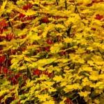 Kolory jesieni-83