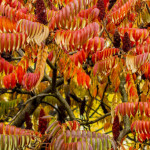 Kolory jesieni-86
