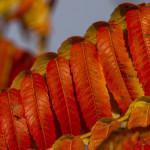 Kolory jesieni-87