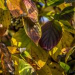 Kolory jesieni-9