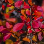Kolory jesieni-90