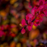 Kolory jesieni-92