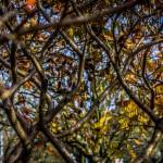 Kolory jesieni-97
