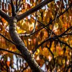 Kolory jesieni-98