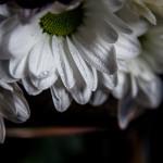 Biało czerwno 20131109-13