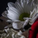 Biało czerwno 20131109-14
