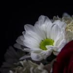 Biało czerwno 20131109-15