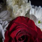 Biało czerwno 20131109-21