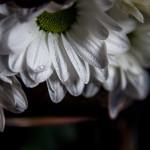 Biało czerwno 20131109-24