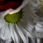 Biało czerwno 20131109-9